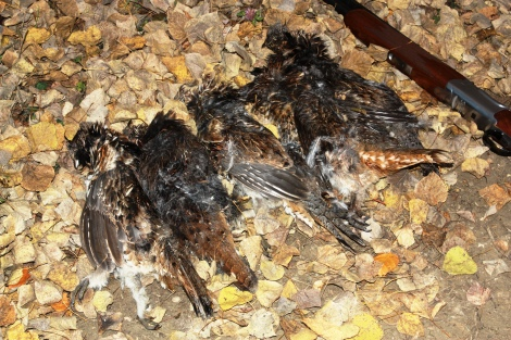 Alberta Ruffed Grouse Limit