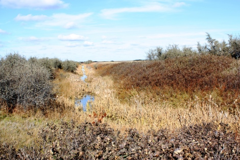 Eastern Irrigation District Pheasant Ditch